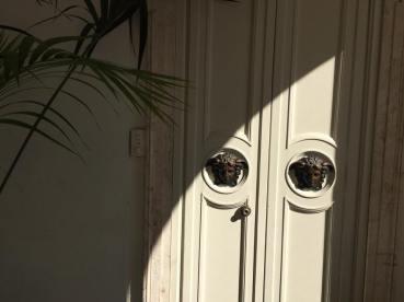 門把也是美杜莎❤️